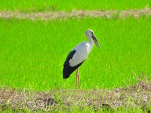 Perlis State Park Birdwatching