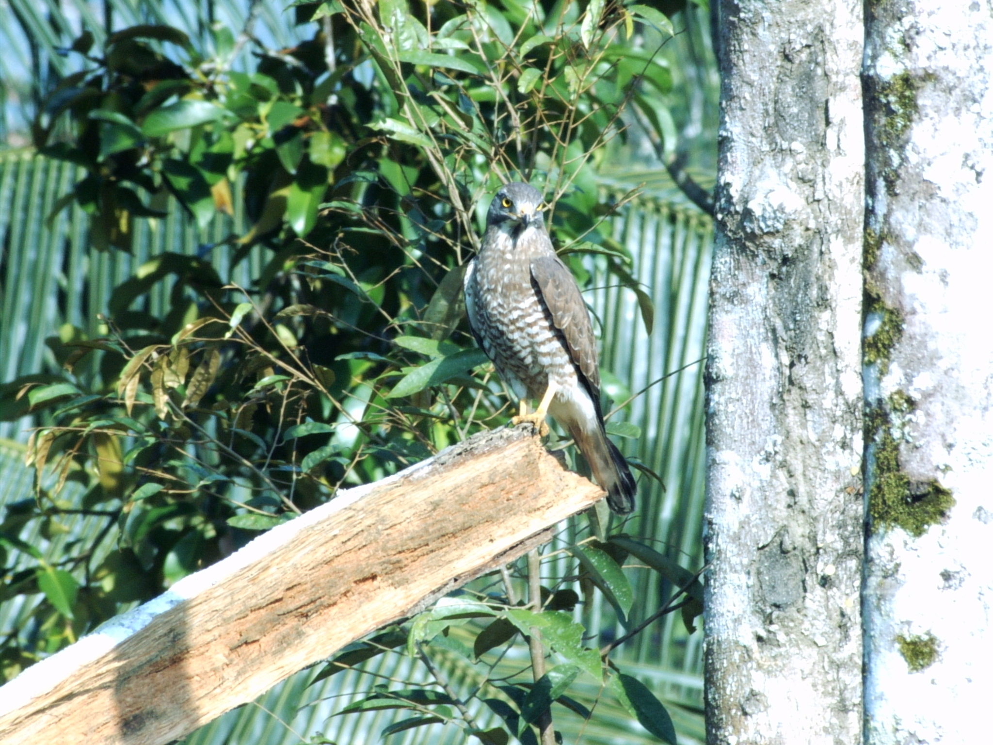 Read more about the article Borneo Montane Birds