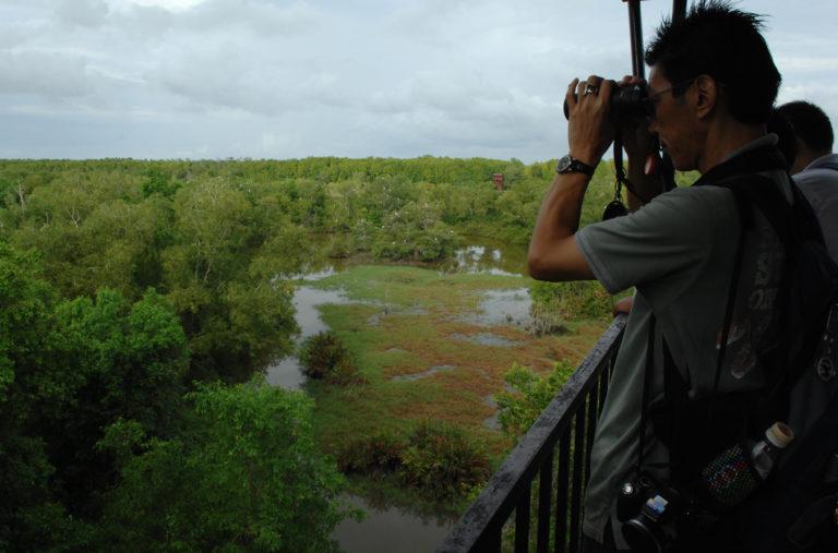 Kuala Selangor Birding (8)