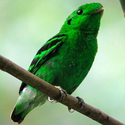 Penang Birdwatching