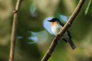 Kuala Selangor Birdwatching