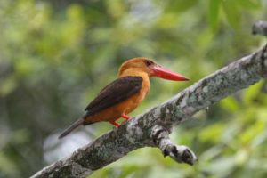 Langkawi Birdwatching