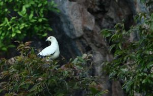 Peninsular Island Birds