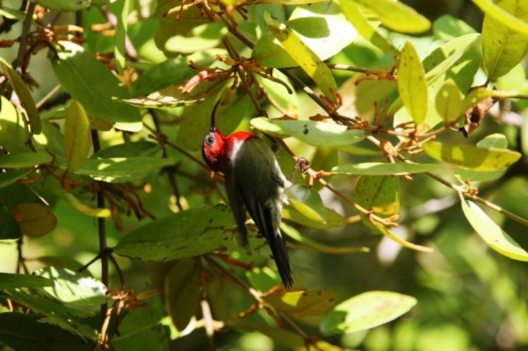 central-route-Temminck's Sunbird