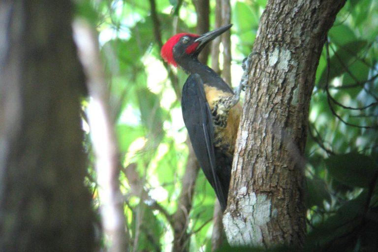 Bird Malaysia North Route